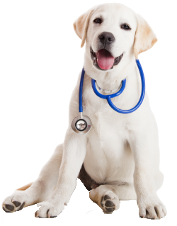 resized_250x319_lab_pup_stethescope-2